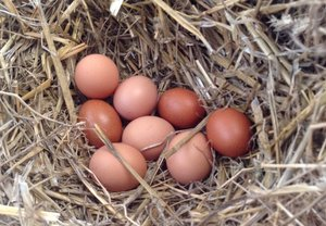 Hens eggs laid in the back of the trailer